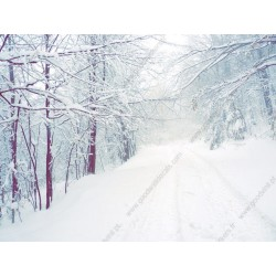 Papel de parede bosque com neve
