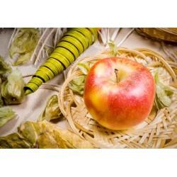 Foto mural maçã