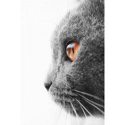 Mural de parede gato cinzento