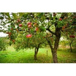Mural de parede árvore de fruta