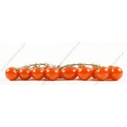 Papel pintado tomates
