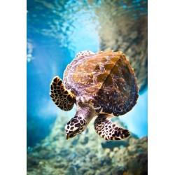 Papel pintado tartaruga no mar