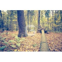 Papel de parede árvore caída