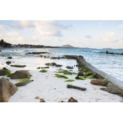 Mural decorativo praia rochosa