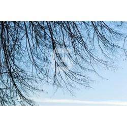 Mural de parede céu azul
