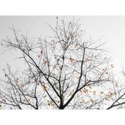 Foto mural árvore outono