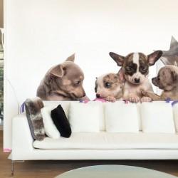Papel de parede cães
