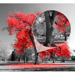Fotomural preto e vermelho