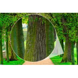 Mural de parede com árvores