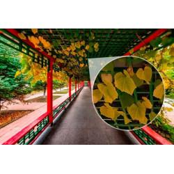 Mural de parede corredor china