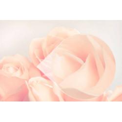 Mural de parede rosas brancas