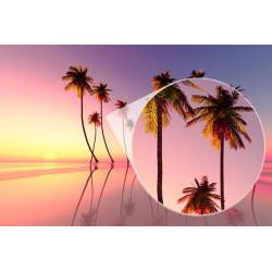 Foto mural palmeiras pôr do sol