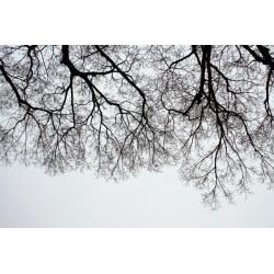 Autocolante ramos da árvore