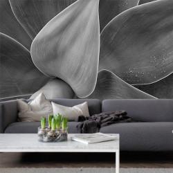 Foto mural planta antúrio