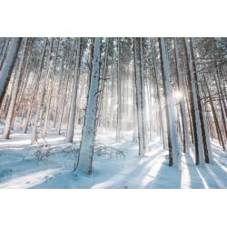 Papel de parede neve na floresta