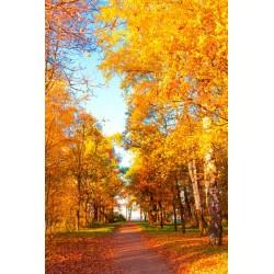Mural de parede árvores no outono