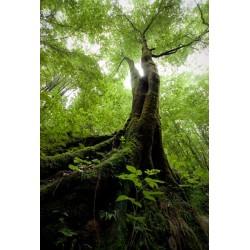 Papel de parede árvore antiga