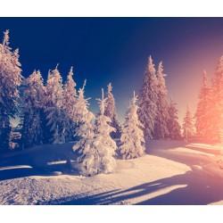 Foto mural neve na floresta