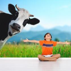 Papel pintado  vaca