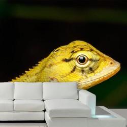 Papel de parede camaleão