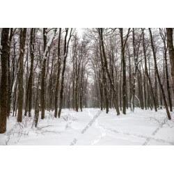 Mural de parede neve no bosque