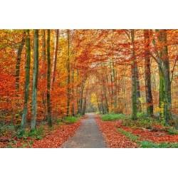 Vinil de floresta Outono