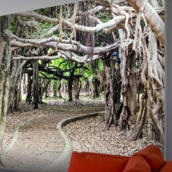 Vinil árvore de Banyan