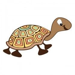 Vinil infantil tartaruga